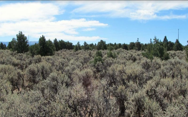 beautiful hunting land for sale in Costilla County, Colorado