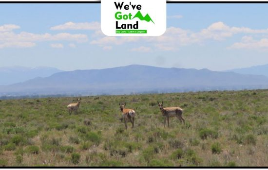 80 Acres Land in La Jara, CO